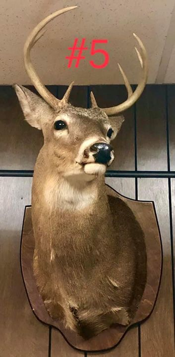 Didn't  realize we had so many Taxidermy head mounts. This group is for sale. Reach out for questions or better photos.