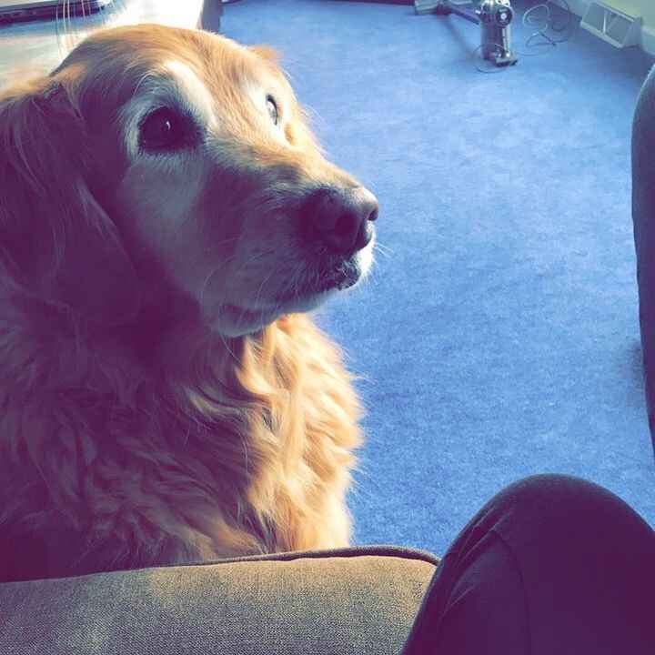 Give me food…🍩🍟🥗 I love food #dog #food #goldenretriever #p**ping #queen #still #update #love #life #ya